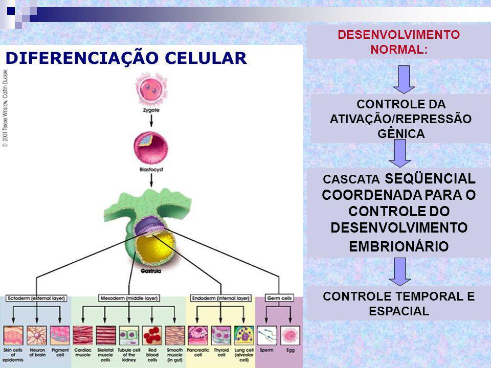 CAMPO DE DESENVOLVIMENTO É uma região ou parte do embrião (pluripotente) que responde como uma unidade coordenada a estímulos extrínsecos e intrínsecos → apresenta diferenciação progressiva, dirigida e irreversível da morfogênese segmentar específica do embrião.