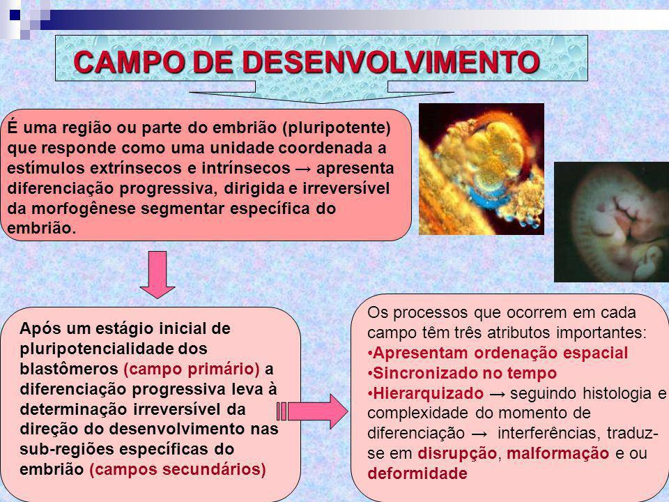 CAMPO DE DESENVOLVIMENTO É uma região ou parte do embrião (pluripotente) que responde como uma unidade coordenada a estímulos extrínsecos e intrínseco