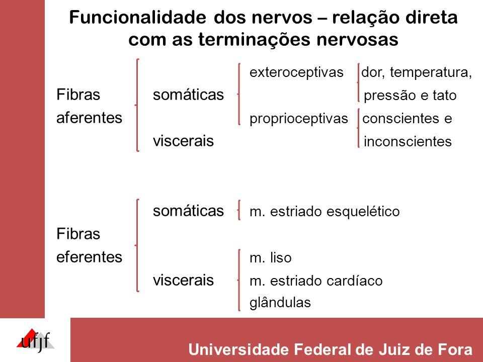 Universidade Federal de Juiz de Fora Funcionalidade dos nervos – relação direta com as terminações nervosas exteroceptivas dor, temperatura, Fibrassom