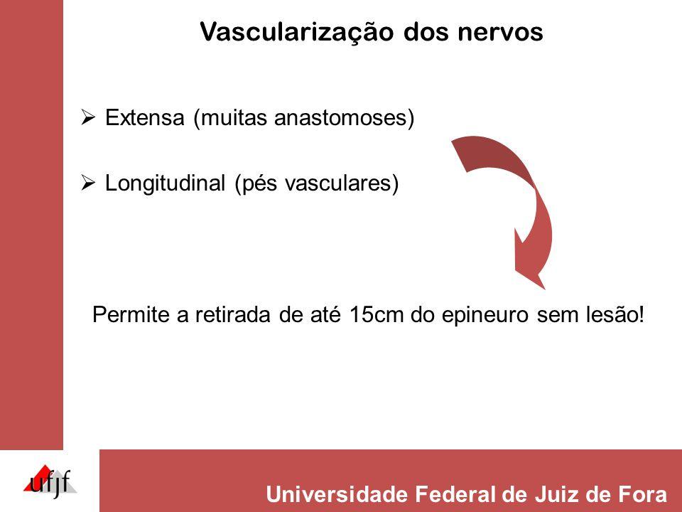 Universidade Federal de Juiz de Fora Vascularização dos nervos  Extensa (muitas anastomoses)  Longitudinal (pés vasculares) Permite a retirada de até 15cm do epineuro sem lesão!