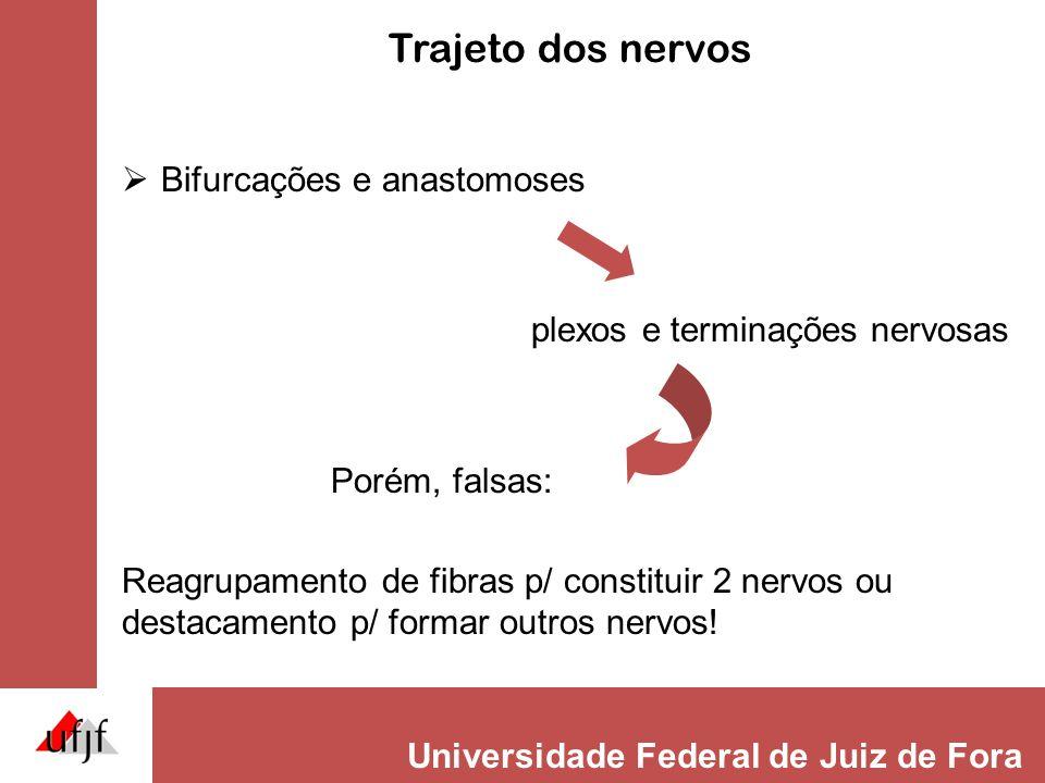 Universidade Federal de Juiz de Fora Localização dos nervos Origem realOrigem aparente corpo do neurônio emergência no SNC ou no esqueleto