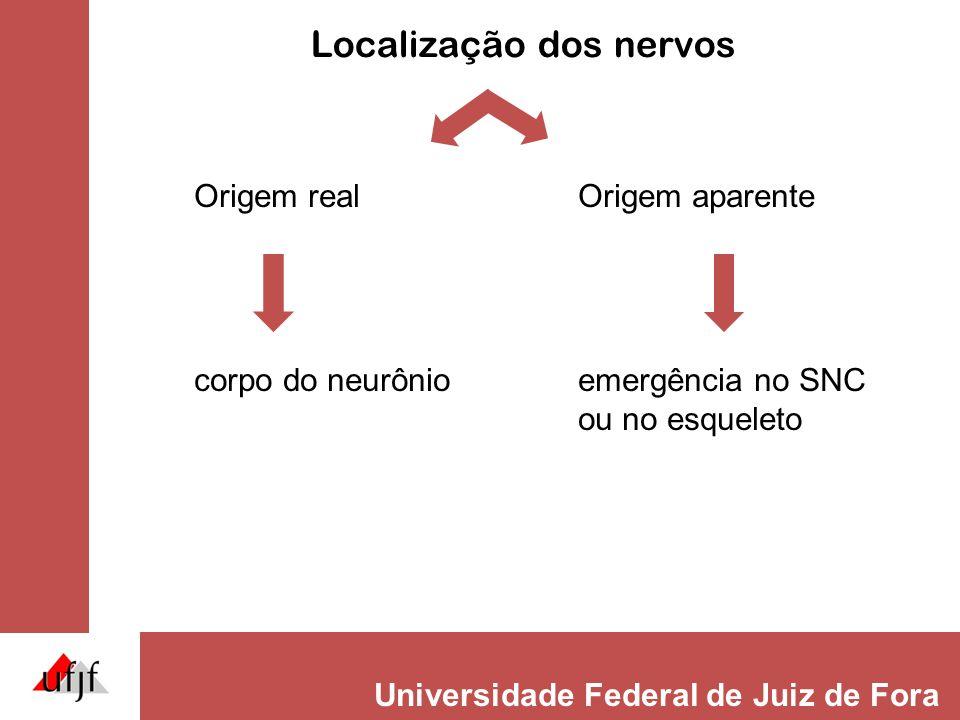Campo radicular motor (Miótomo) Músculos unirradiculares plurirradiculares (intercostais)(plexos) Unidade motora: 1 neurônio motor + todas as fibras musculares inervadas por ele