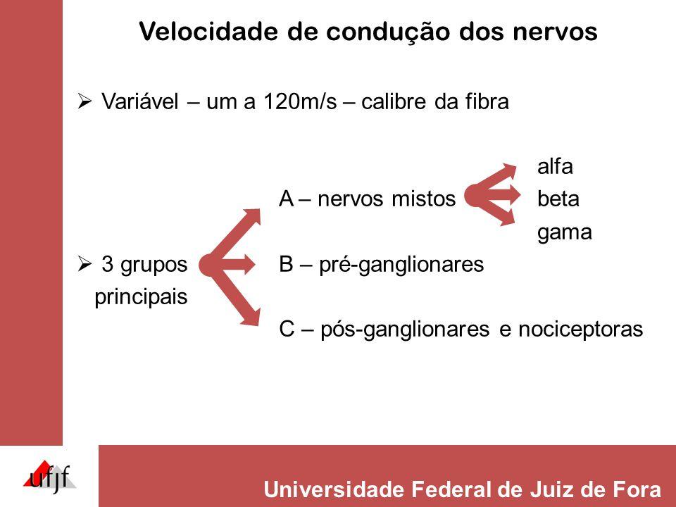 Universidade Federal de Juiz de Fora Lesão nervosa periférica