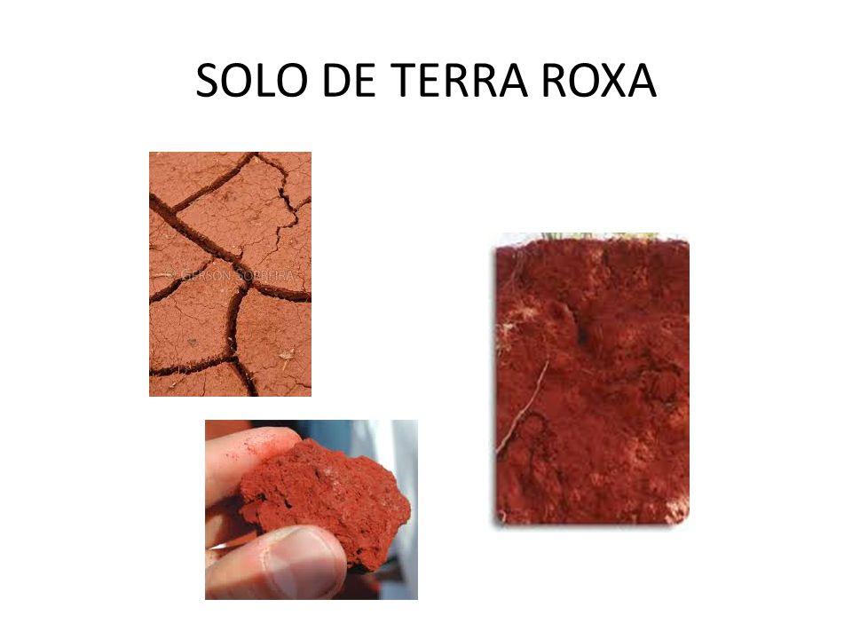 SOLO DE TERRA ROXA