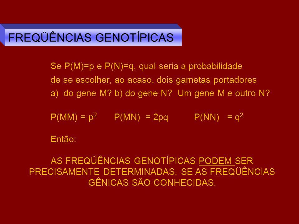 Dois alelos, com freqüências p e q, que se associam ao acaso determinam NA GERAÇÀO SEGUINTE genótipos com freqüências de acordo com a expansão do binômio (p + q) 2.