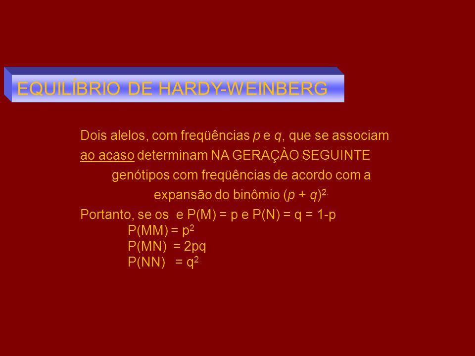Dois alelos, com freqüências p e q, que se associam ao acaso determinam NA GERAÇÀO SEGUINTE genótipos com freqüências de acordo com a expansão do binô