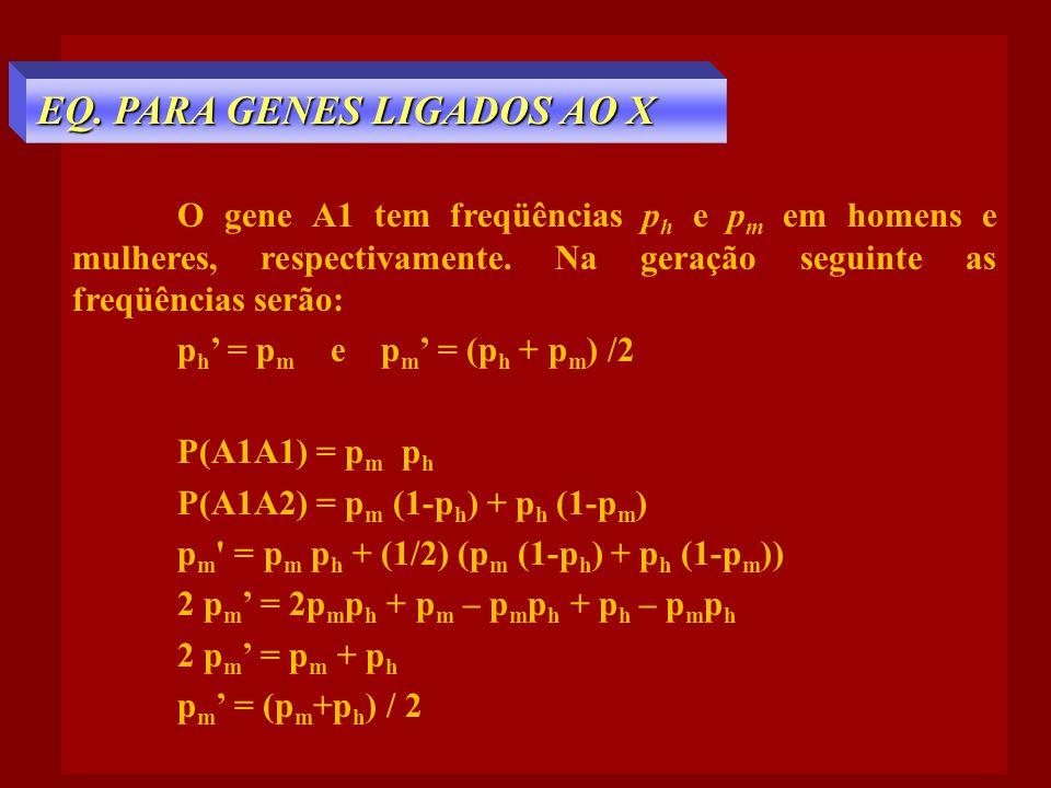 O gene A1 tem freqüências p h e p m em homens e mulheres, respectivamente. Na geração seguinte as freqüências serão: p h ' = p m e p m ' = (p h + p m