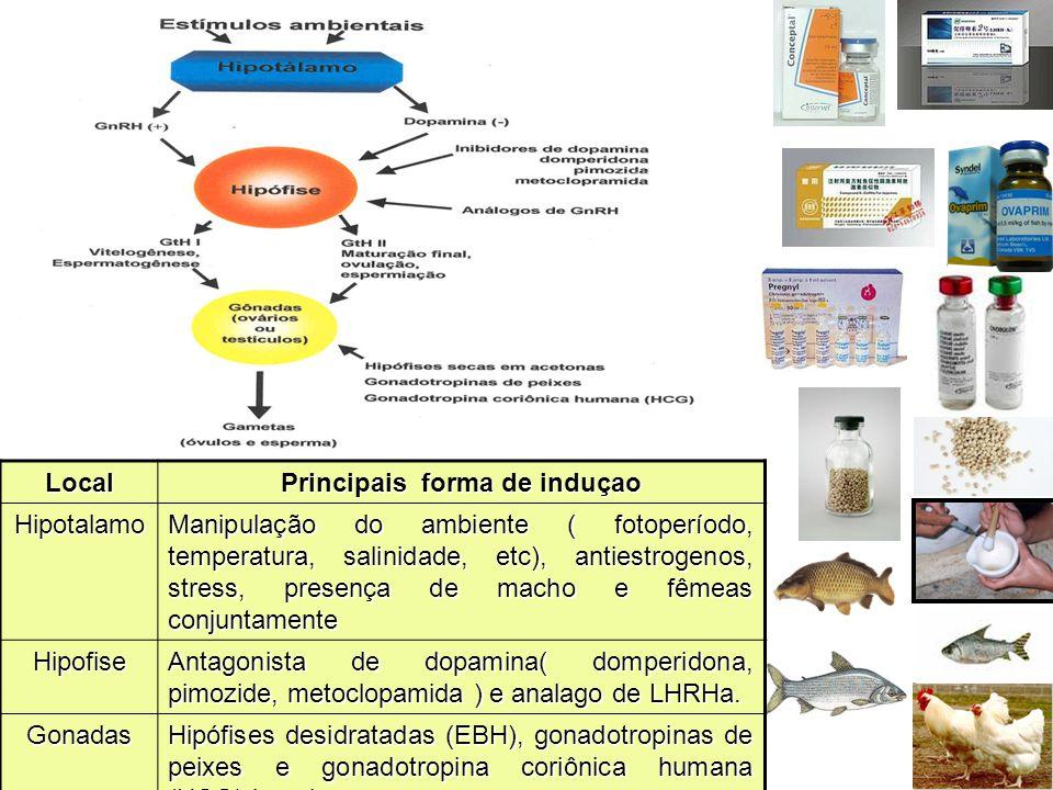 Local Principais forma de induçao Hipotalamo Manipulação do ambiente ( fotoperíodo, temperatura, salinidade, etc), antiestrogenos, stress, presença de