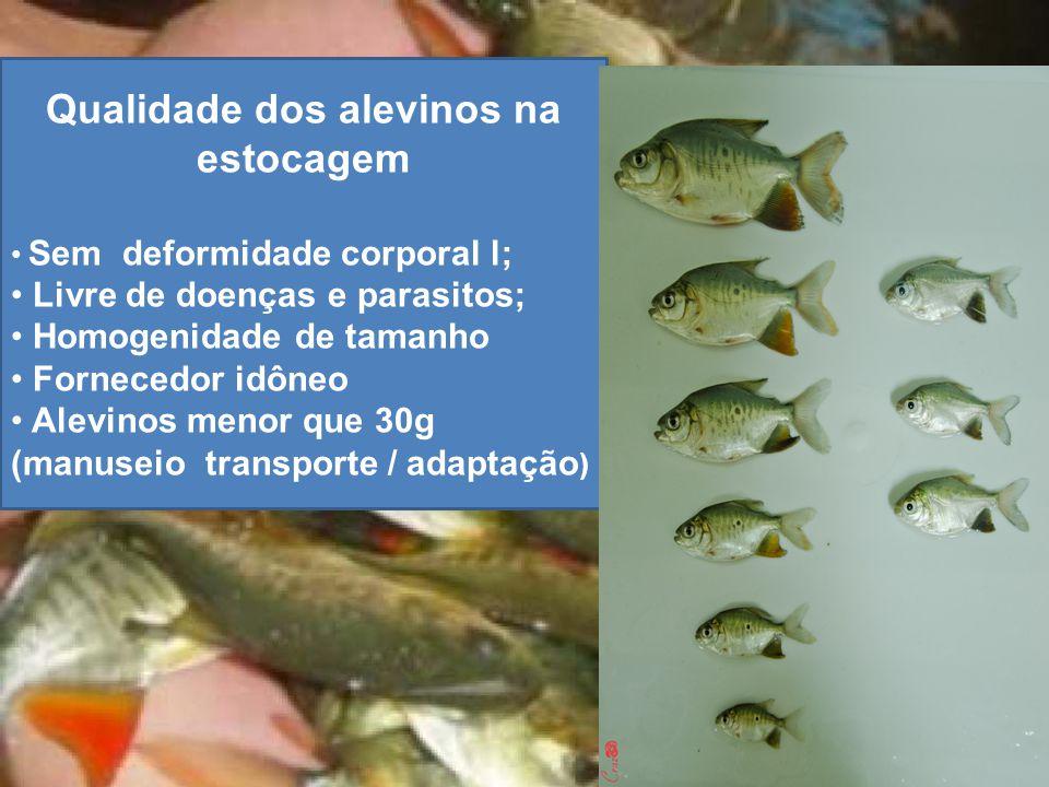 Qualidade dos alevinos na estocagem Sem deformidade corporal l; Livre de doenças e parasitos; Homogenidade de tamanho Fornecedor idôneo Alevinos menor