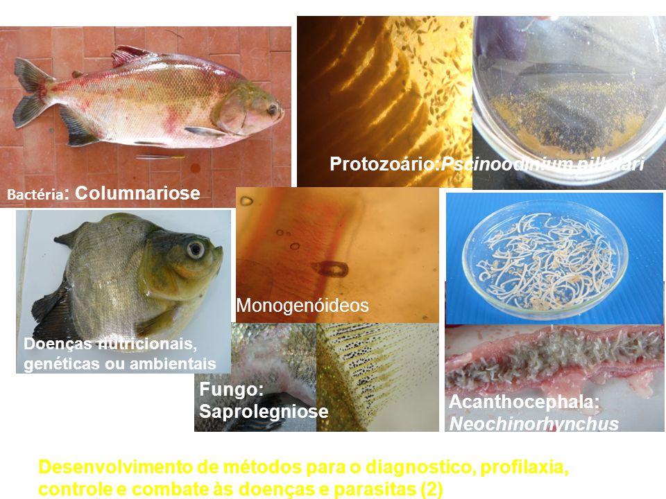 Agentes potencialmente patogênicos registrados em cultivo de tambaqui na região Protozoário:Pscinoodinium pillulari Acanthocephala: Neochinorhynchus b