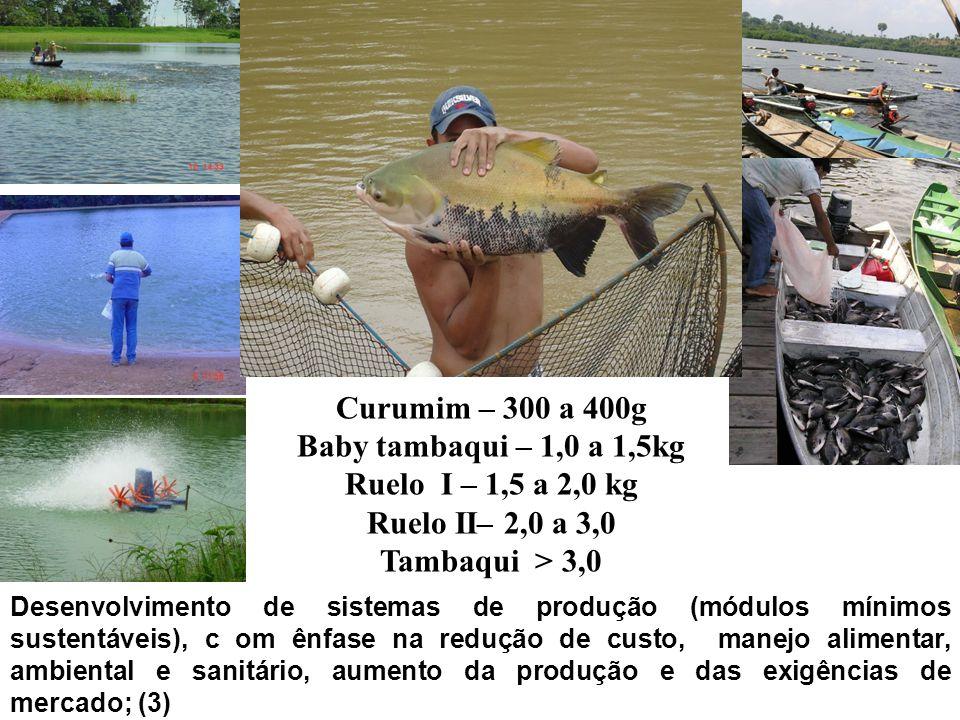 Curumim – 300 a 400g Baby tambaqui – 1,0 a 1,5kg Ruelo I – 1,5 a 2,0 kg Ruelo II– 2,0 a 3,0 Tambaqui > 3,0 Desenvolvimento de sistemas de produção (mó
