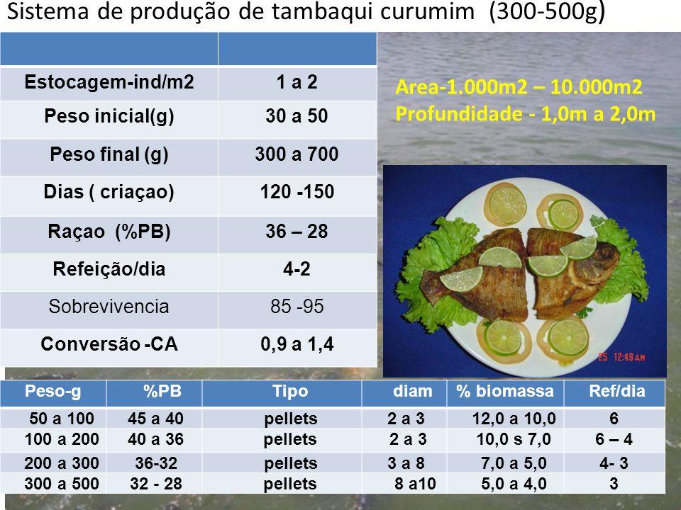 Sistema de produção de tambaqui curumim (300-500g ) Estocagem-ind/m21 a 2 Peso inicial(g)30 a 50 Peso final (g)300 a 700 Dias ( criaçao)120 -150 Raçao
