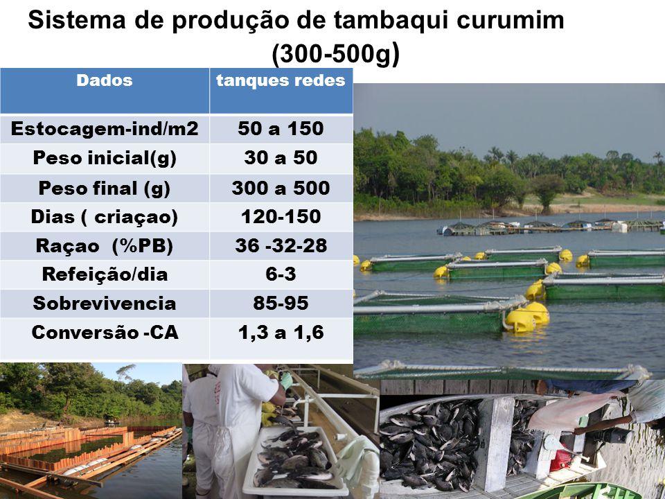 Dadostanques redes Estocagem-ind/m250 a 150 Peso inicial(g)30 a 50 Peso final (g)300 a 500 Dias ( criaçao)120-150 Raçao (%PB)36 -32-28 Refeição/dia6-3