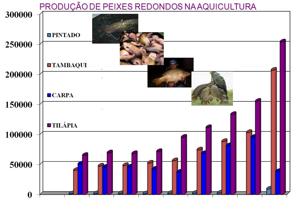 Pacu Piaractus mesopotamicus Tambaqui Colossoma macropomum Pirapitinga -Piaractus braquipomum Levantamento, caracterização e avaliação dos diferentes ecossistemas de distribuição das espécies selecionadas ( 2) Geração de conhecimento e métodos para definição, monitoramento e avaliação de impactos ambientais nos ecossistemas (2) Pesquisas para estabelecimento de Bancos Genéticos Selvagens e Cultivados (1)