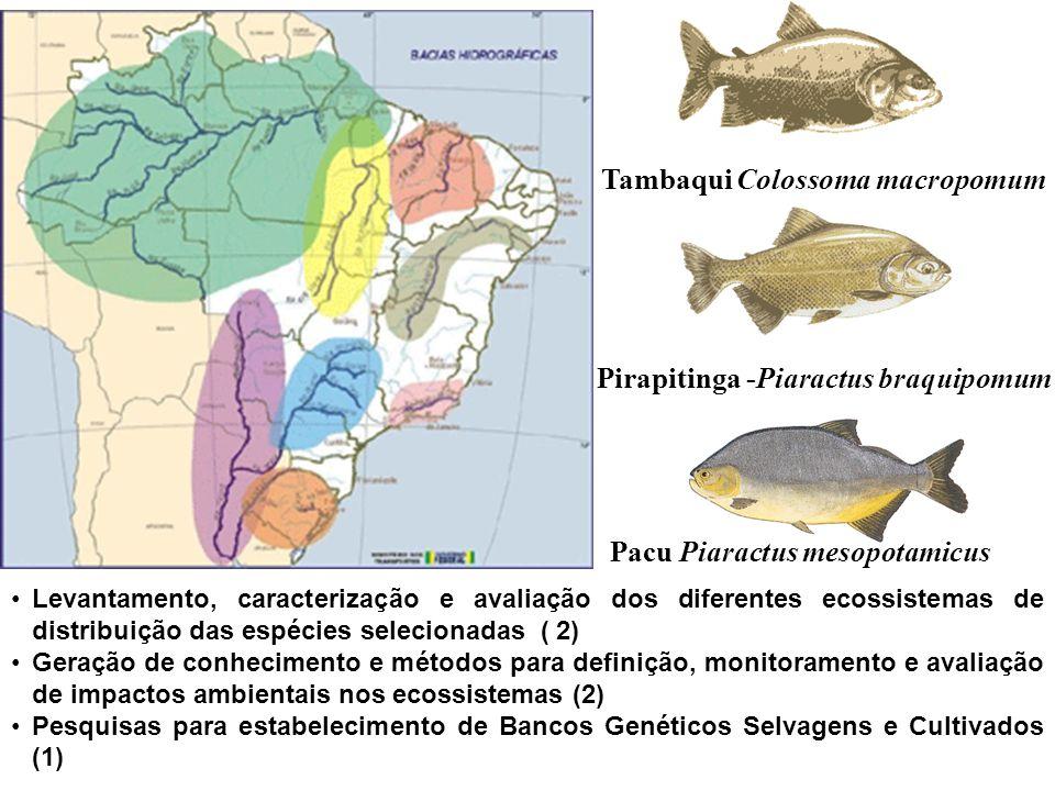 Pacu Piaractus mesopotamicus Tambaqui Colossoma macropomum Pirapitinga -Piaractus braquipomum Levantamento, caracterização e avaliação dos diferentes