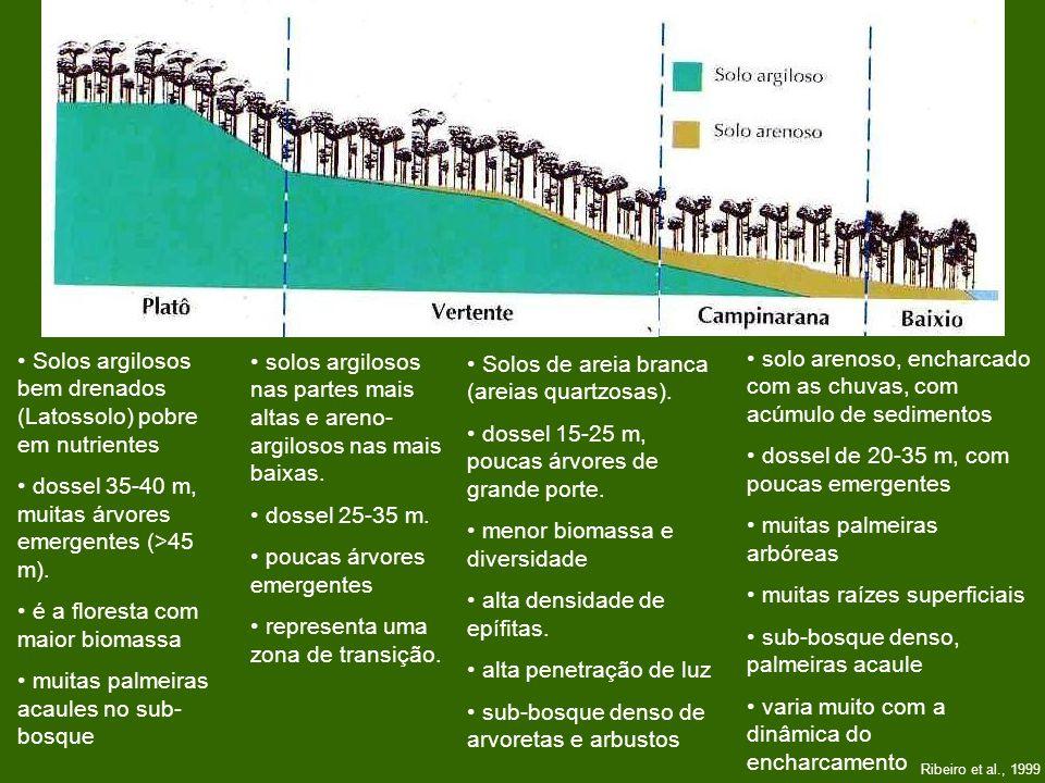 Ribeiro et al., 1999 Solos argilosos bem drenados (Latossolo) pobre em nutrientes dossel 35-40 m, muitas árvores emergentes (>45 m). é a floresta com