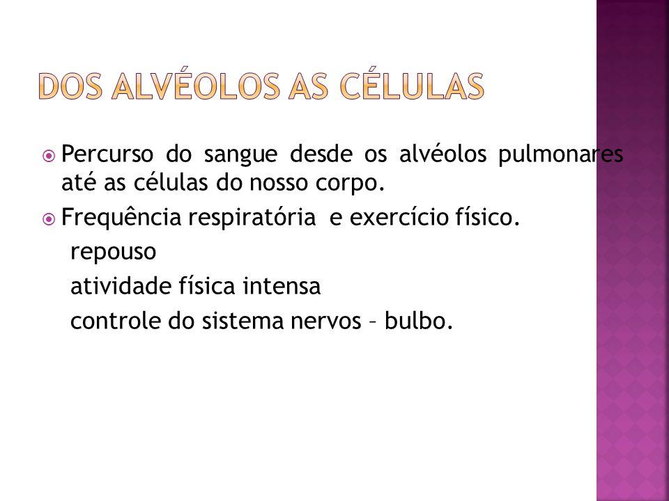  Percurso do sangue desde os alvéolos pulmonares até as células do nosso corpo.  Frequência respiratória e exercício físico. repouso atividade físic