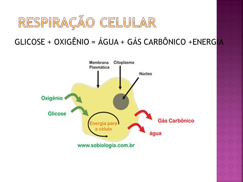 GLICOSE + OXIGÊNIO = ÁGUA + GÁS CARBÔNICO +ENERGIA