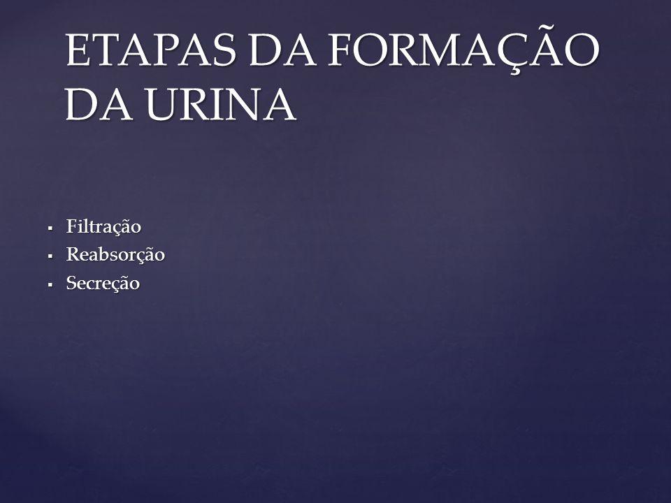  Filtração  Reabsorção  Secreção ETAPAS DA FORMAÇÃO DA URINA