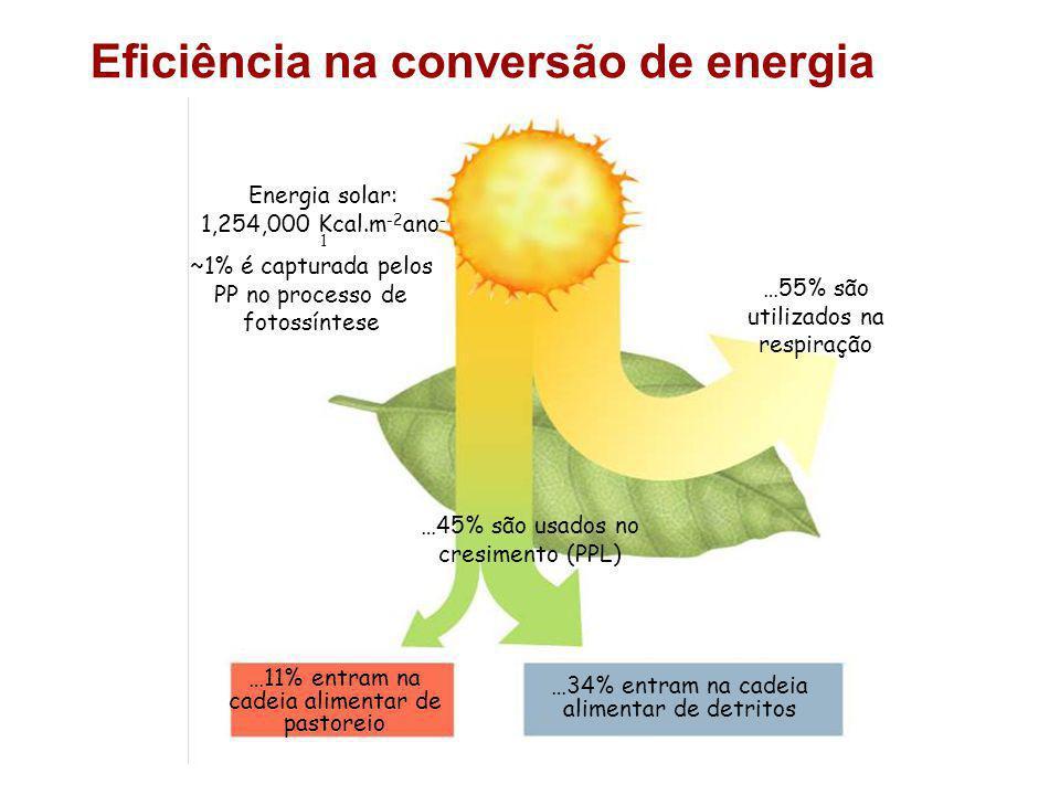 Energia solar: 1,254,000 Kcal.m -2 ano - 1 ~1% é capturada pelos PP no processo de fotossíntese …45% são usados no cresimento (PPL) …11% entram na cadeia alimentar de pastoreio …34% entram na cadeia alimentar de detritos …55% são utilizados na respiração Eficiência na conversão de energia