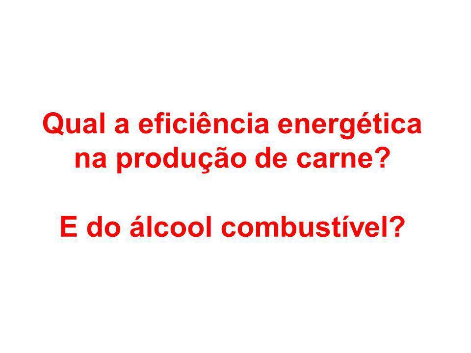 Qual a eficiência energética na produção de carne? E do álcool combustível?