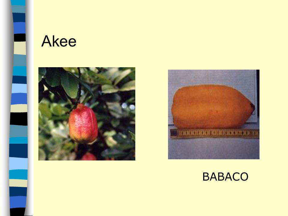 Akee BABACO