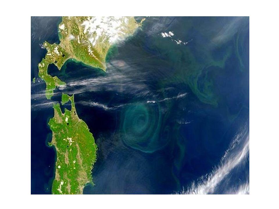 No oceano pacífico há uma enorme camada flutuante de plástico, que já é considerada a maior concentração de lixo do mundo, com cerca de 1000 km de extensão, vai da costa da Califórnia, atravessa o Havaí e chega a meio caminho do Japão e atinge uma profundidade de mais ou menos 10 metros.