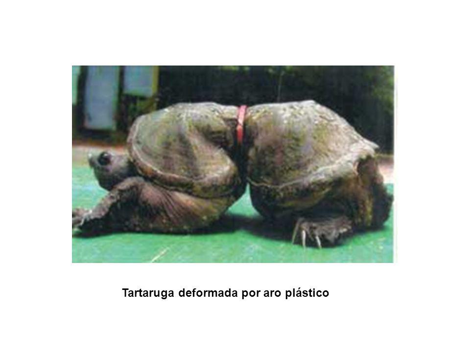 Segundo PNUMA, o programa das nações unidas para o meio ambiente, este plástico é responsável pela morte de mais de um milhão de aves marinha todos os anos.