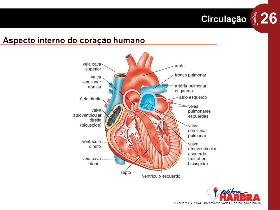 26 Circulação © editora HARBRA. Direitos reservados. Reprodução proibida. Aspecto interno do coração humano