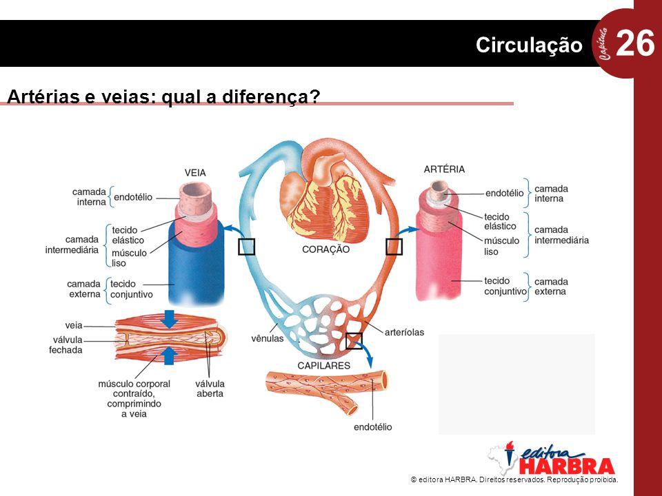 26 Circulação © editora HARBRA. Direitos reservados. Reprodução proibida. Artérias e veias: qual a diferença?