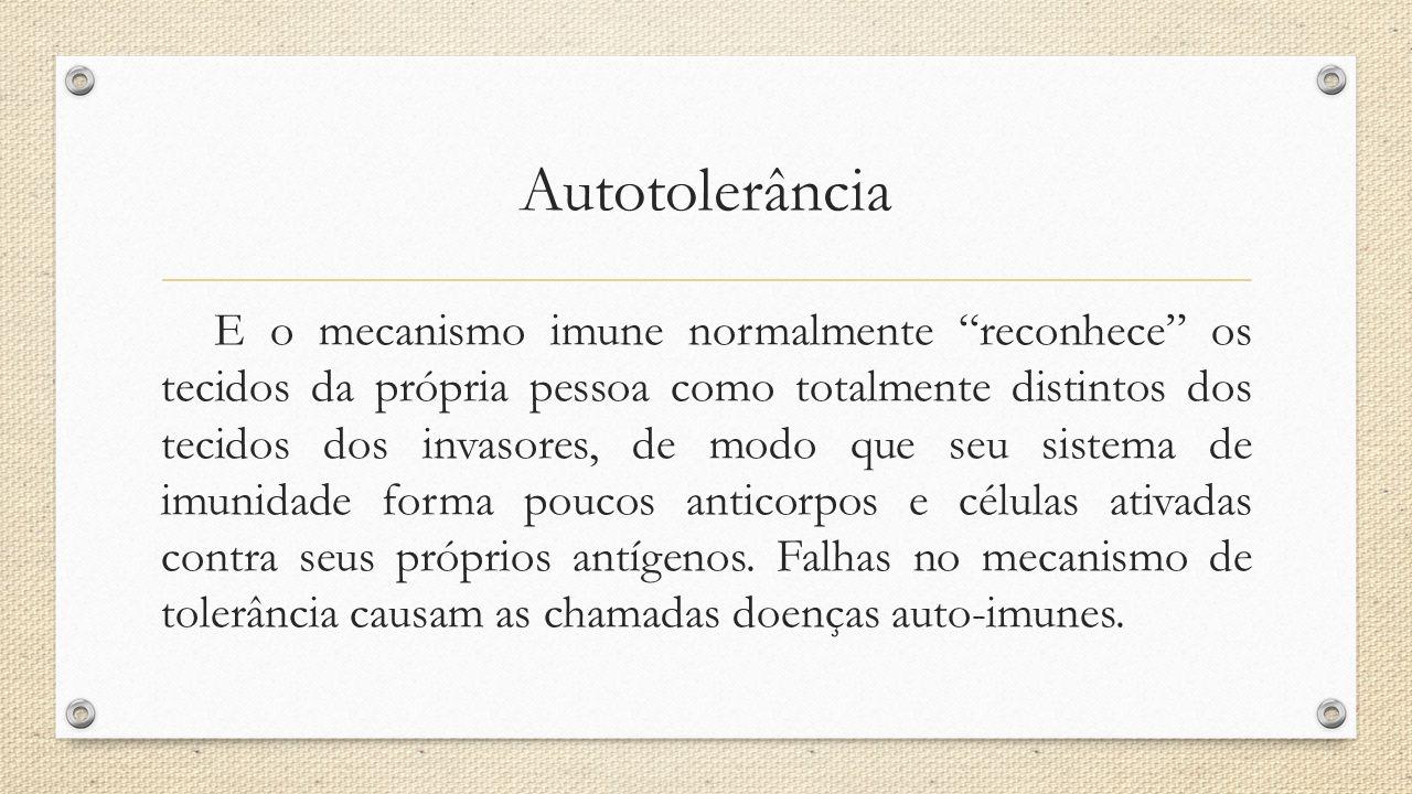 """Autotolerância E o mecanismo imune normalmente """"reconhece"""" os tecidos da própria pessoa como totalmente distintos dos tecidos dos invasores, de modo q"""