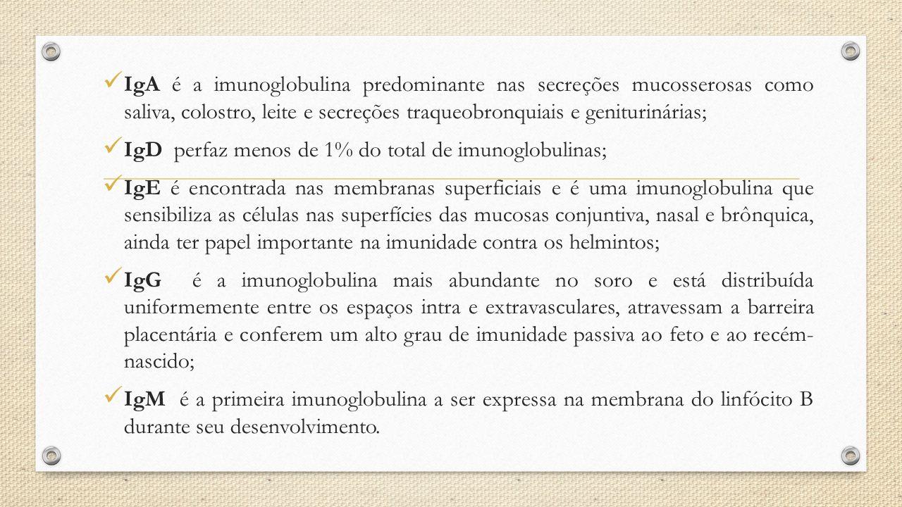 IgA é a imunoglobulina predominante nas secreções mucosserosas como saliva, colostro, leite e secreções traqueobronquiais e geniturinárias; IgD perfaz