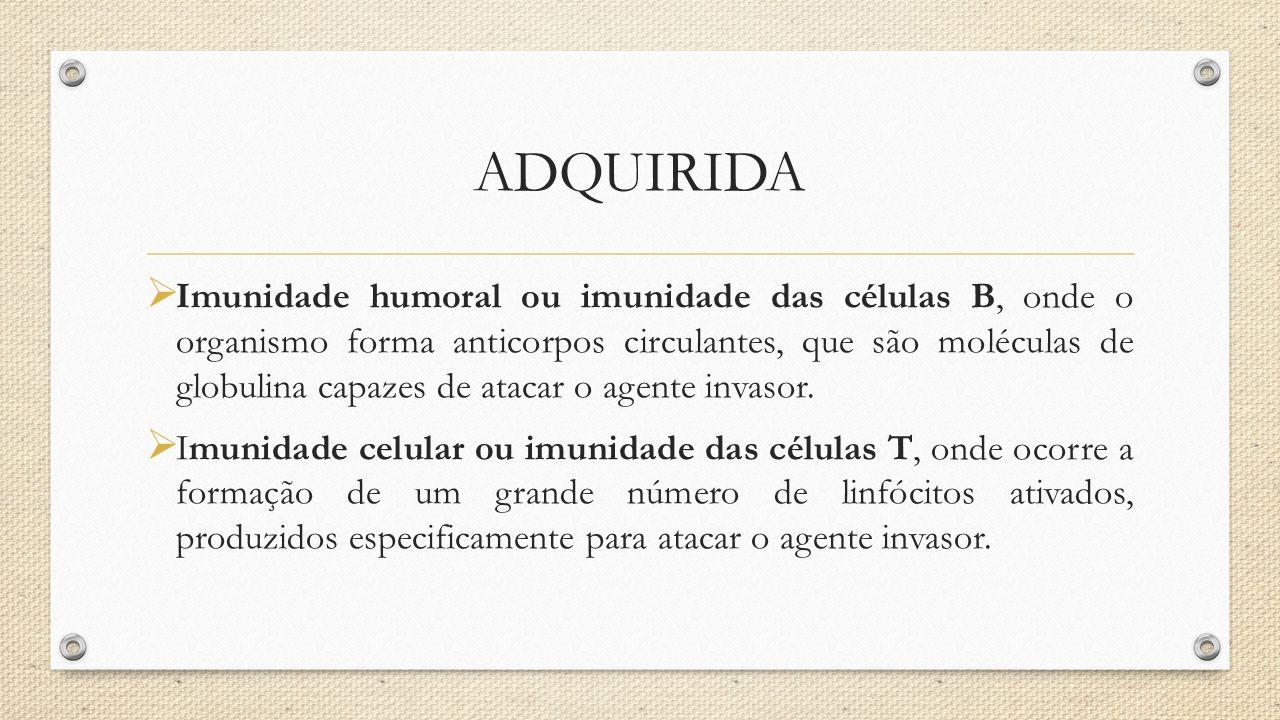 ADQUIRIDA  Imunidade humoral ou imunidade das células B, onde o organismo forma anticorpos circulantes, que são moléculas de globulina capazes de ata