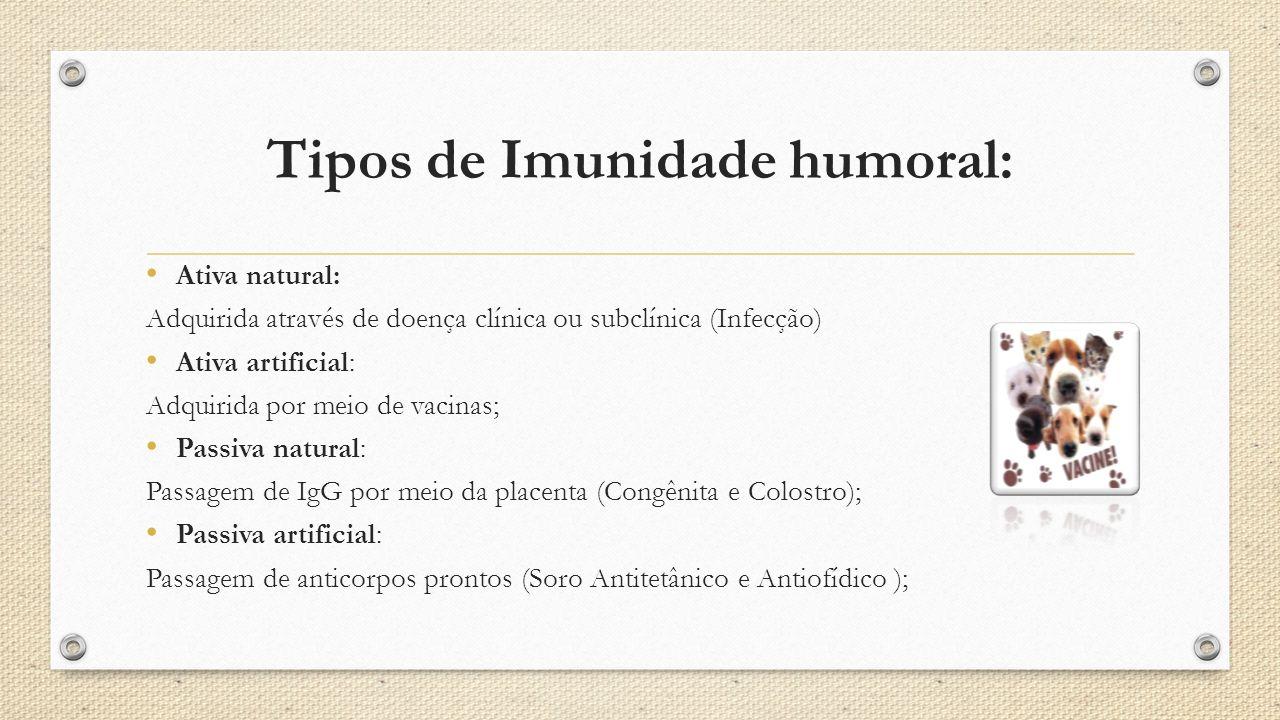 Tipos de Imunidade humoral: Ativa natural: Adquirida através de doença clínica ou subclínica (Infecção) Ativa artificial: Adquirida por meio de vacina