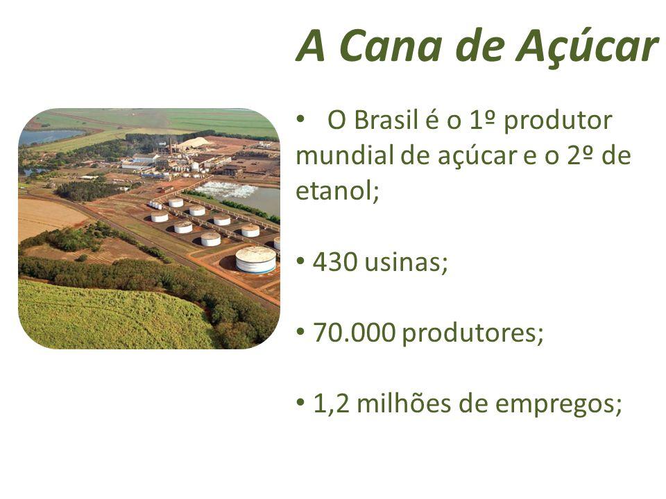 A Cana de Açúcar O Brasil é o 1º produtor mundial de açúcar e o 2º de etanol; 430 usinas; 70.000 produtores; 1,2 milhões de empregos;