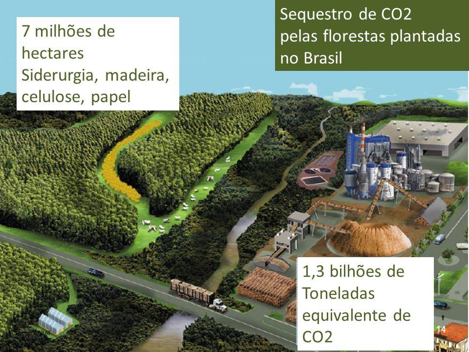 7 milhões de hectares Siderurgia, madeira, celulose, papel 1,3 bilhões de Toneladas equivalente de CO2 Sequestro de CO2 pelas florestas plantadas no B