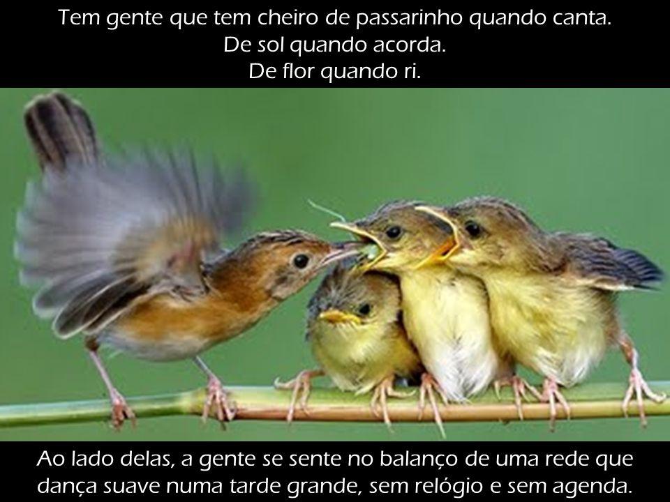 Tem gente que tem cheiro de passarinho quando canta.