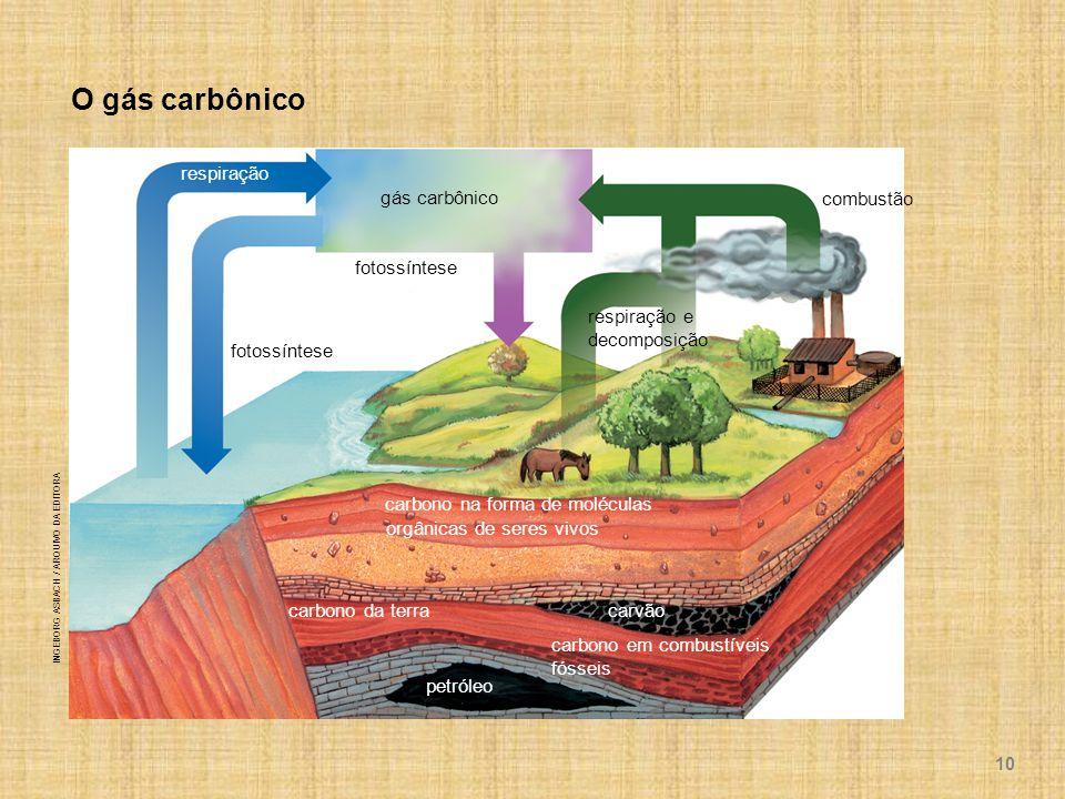 O gás carbônico respiração gás carbônico combustão fotossíntese respiração e decomposição carbono na forma de moléculas orgânicas de seres vivos carbono da terra carvão petróleo carbono em combustíveis fósseis INGEBORG ASBACH / ARQUIVO DA EDITORA 10