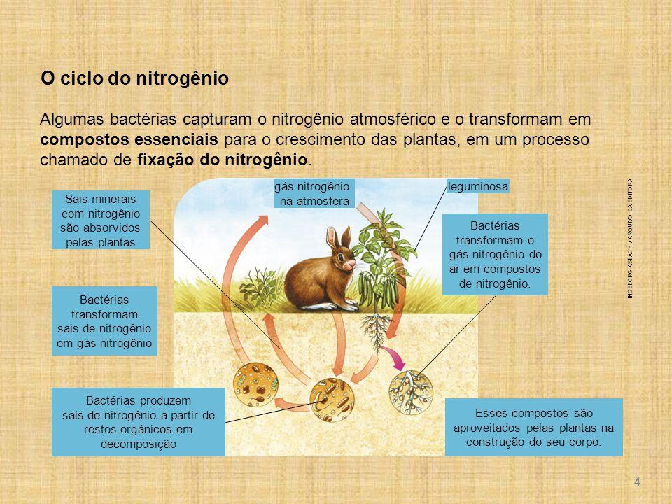 Algumas bactérias capturam o nitrogênio atmosférico e o transformam em compostos essenciais para o crescimento das plantas, em um processo chamado de fixação do nitrogênio.
