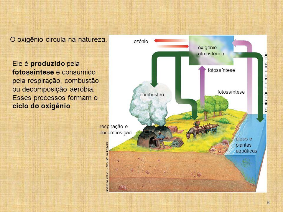 ozônio oxigênio atmosférico respiração e decomposição fotossíntese combustão respiração e decomposição algas e plantas aquáticas INGEBORG ASBACH / ARQUIVO DA EDITORA Ele é produzido pela fotossíntese e consumido pela respiração, combustão ou decomposição aeróbia.
