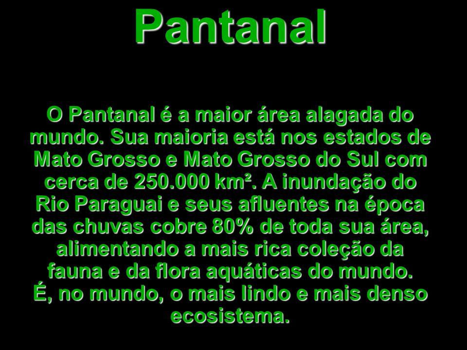 Pantanal O Pantanal é a maior área alagada do mundo.