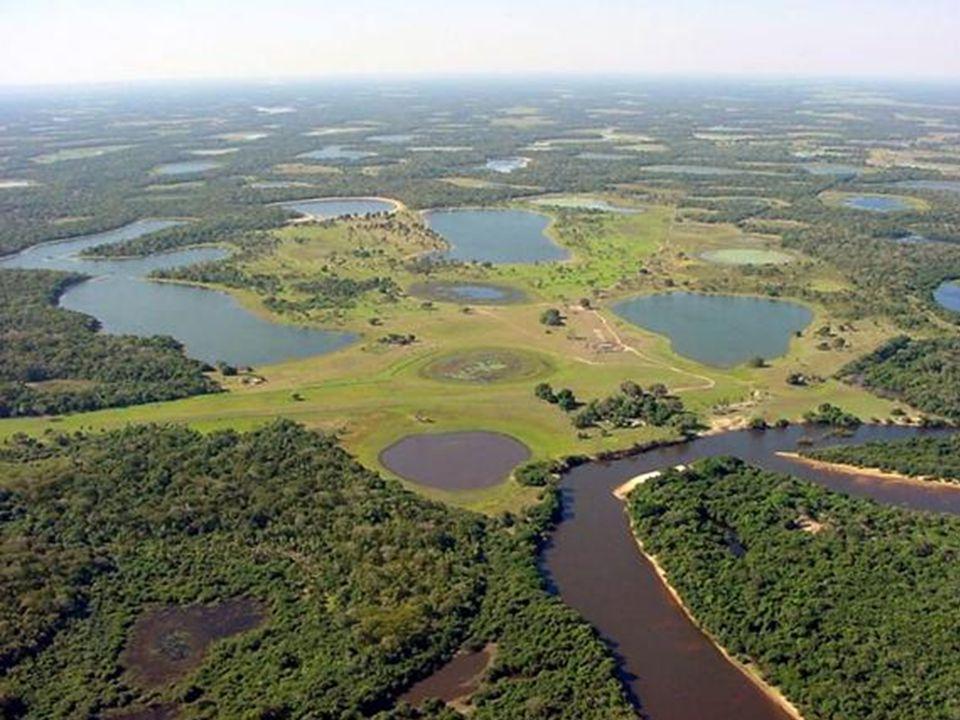 Pantanal O Pantanal é a maior área alagada do mundo. Sua maioria está nos estados de Mato Grosso e Mato Grosso do Sul com cerca de 250.000 km². A inun