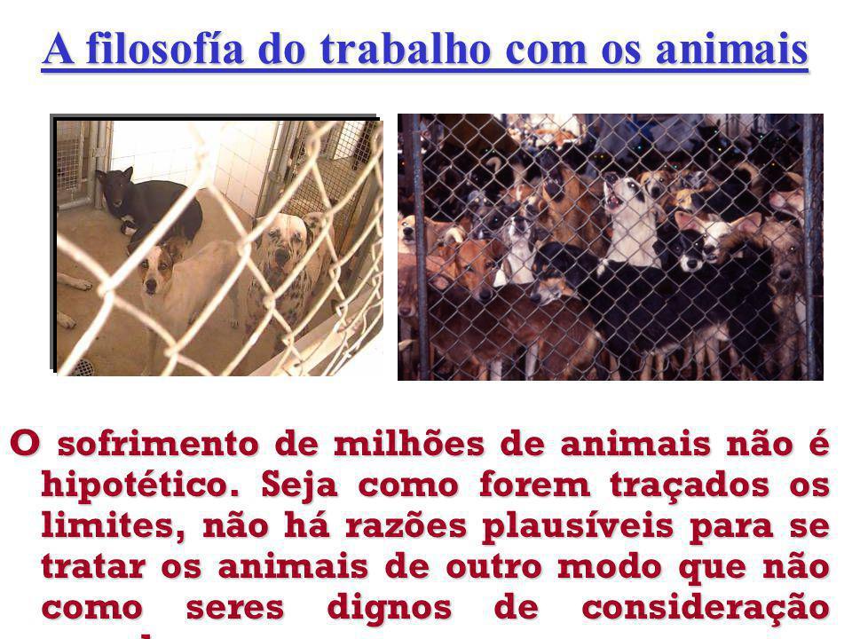 O sofrimento de milhões de animais não é hipotético.