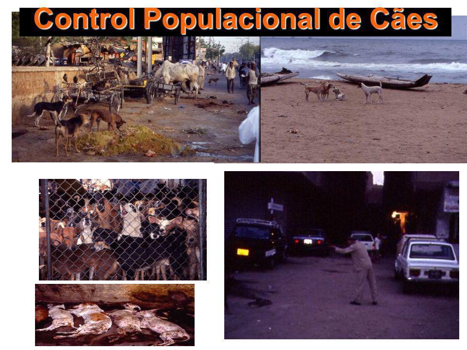 Control Populacional de Cães