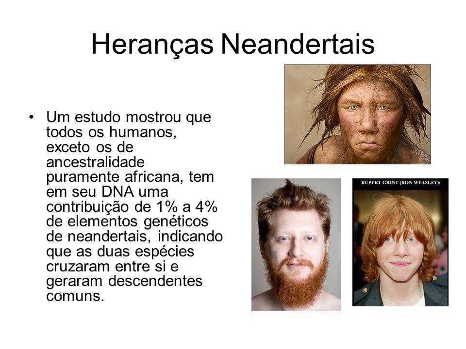 Heranças Neandertais Um estudo mostrou que todos os humanos, exceto os de ancestralidade puramente africana, tem em seu DNA uma contribuição de 1% a 4