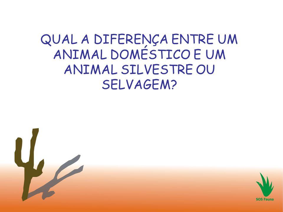 QUAL A DIFERENÇA ENTRE UM ANIMAL DOMÉSTICO E UM ANIMAL SILVESTRE OU SELVAGEM?