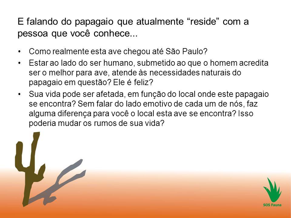 """E falando do papagaio que atualmente """"reside"""" com a pessoa que você conhece... Como realmente esta ave chegou até São Paulo? Estar ao lado do ser huma"""