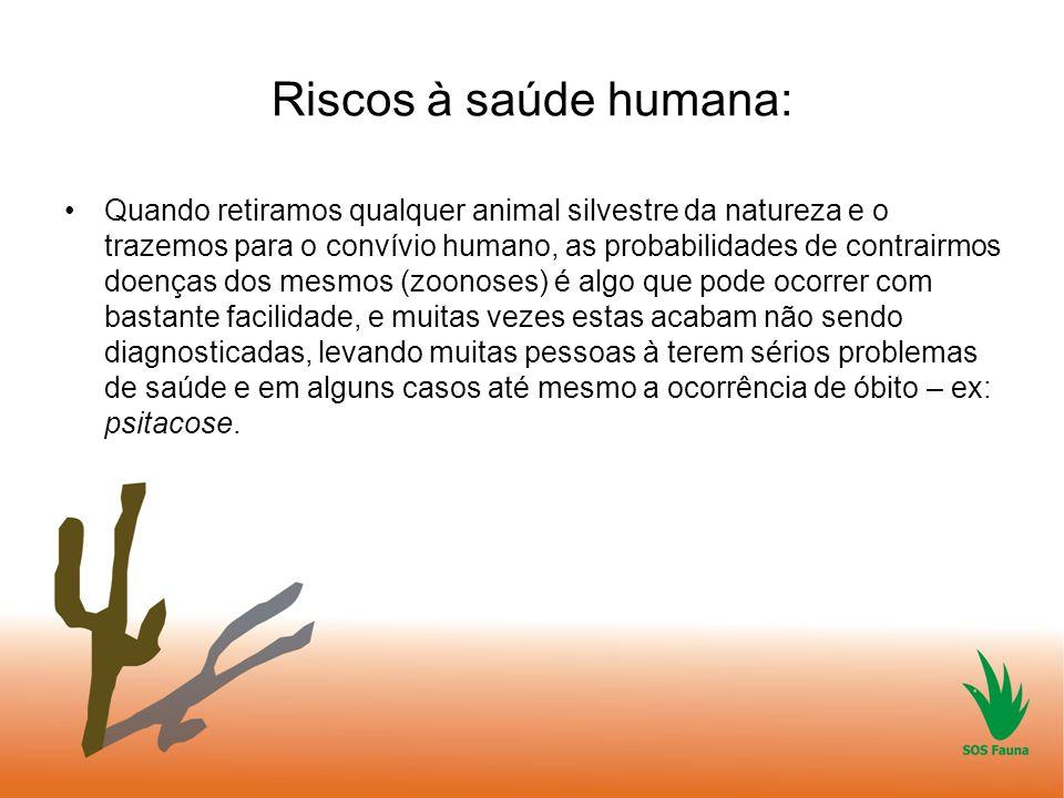 Riscos à saúde humana: Quando retiramos qualquer animal silvestre da natureza e o trazemos para o convívio humano, as probabilidades de contrairmos do