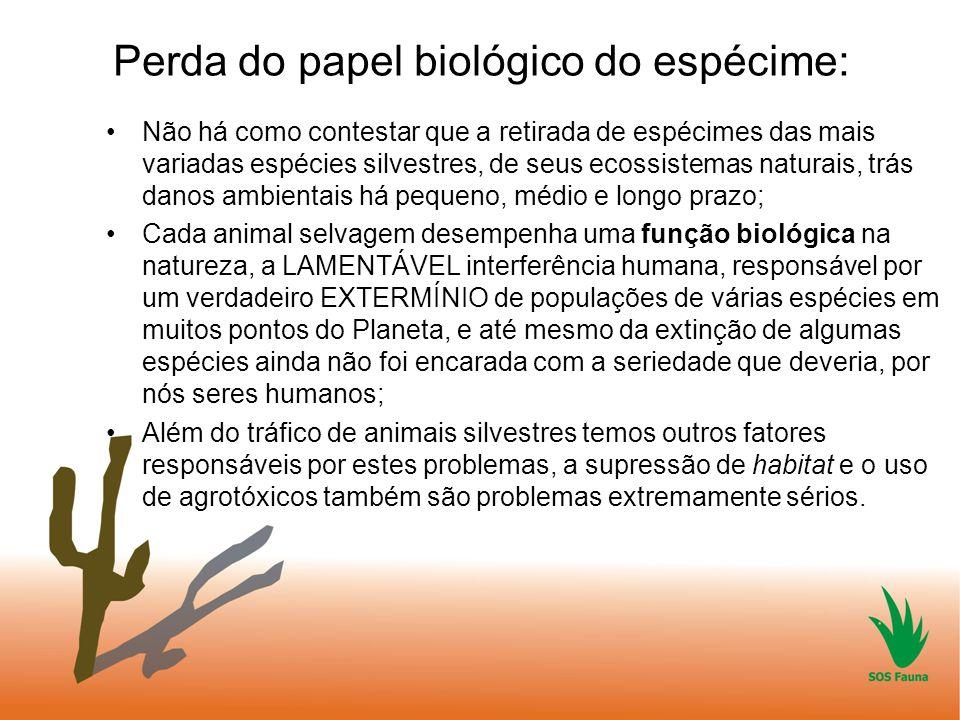 Perda do papel biológico do espécime: Não há como contestar que a retirada de espécimes das mais variadas espécies silvestres, de seus ecossistemas na