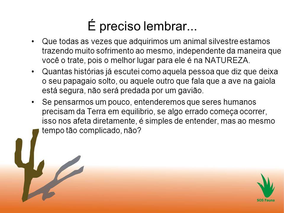É preciso lembrar... Que todas as vezes que adquirimos um animal silvestre estamos trazendo muito sofrimento ao mesmo, independente da maneira que voc
